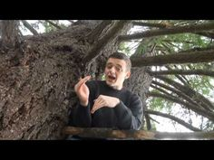 Mr. Scientist and the Temperate Forest Biomes - YouTube