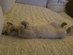 MY CAT.....