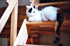 MY stairs. by -MRGT, via Flickr