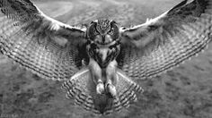 bird flying black and white - Google Search