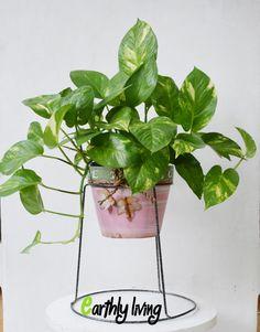 Wire Iron Flower Planter Holder Stand Green Office Home Outdoor Indoor Garden #1 #EarthlyLiving