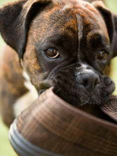 Is Your #Dog Depressed, look for these signs?