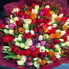 Beautiful Bouquet Of Flowers, Beautiful Flower Arrangements, Tulips Flowers, Beautiful Roses, Spring Flowers, Planting Flowers, Floral Arrangements, Beautiful Flowers, Flower Seeds