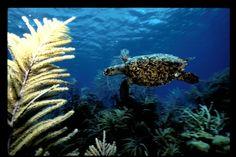 History of #Bonaire's Marine Park