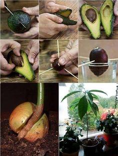 Hay plantas que crecen de gajitos. Date una oportunidad y hacé crecer tus propias plantitas.