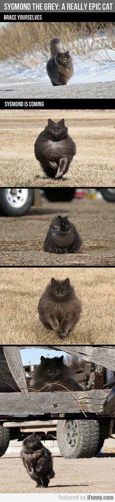 Sygmond The Grey - A Really Epic Cat  #Funny-Pics http://www.flaproductions.net/funny-pics/sygmond-the-grey-a-really-epic-cat/27488/?utm_source=PN&utm_medium=http%3A%2F%2Fwww.pinterest.com%2Falliefernandez3%2Fgreat%2F&utm_campaign=FlaProductions