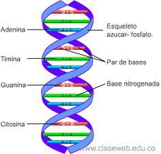 Las 24 Mejores Imágenes De Genètica Biotecnología