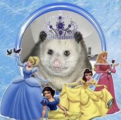 that's my favorite disney princess