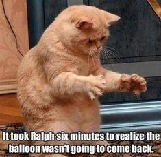 15 Cat Memes Will Bright Your Day! - Funny Baby - 15 Cat Memes Will Bright Your Day! KingdomOfCat The post 15 Cat Memes Will Bright Your Day! appeared first on Gag Dad. Cute Cat Memes, Cute Animal Memes, Cute Funny Animals, Funny Cute, Funny Shit, Cute Cats, Funny Memes, Funny Kittens, Adorable Kittens