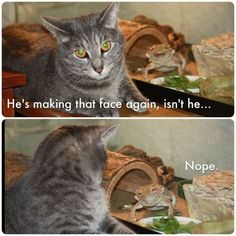 seriously. I had a gray cat that looked just like that and my brother had a bearded dragon (that's the lizard)...that situation happened in my house in high school, for sure.
