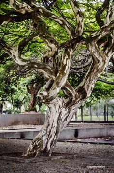 Old Tree... - Museu de art Moderna, Rio de Janeiro, Brazil, South America Brazil, Plants, Museum, Rio De Janeiro, Plant, Planets