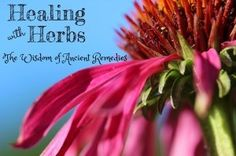 Expand your knowledge to use herbs for optimal health and wellness, listen to this inspiring podcast: http://livingawareness.com/healing-herbs-wisdom-ancient-remedies/?utm_content=buffer2d68b&utm_medium=social&utm_source=pinterest.com&utm_campaign=buffer #plantwisdom