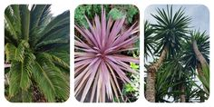 Tropical plants from my garden