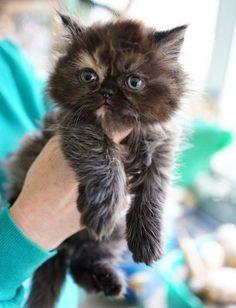 What A Cutie 15th November 2019 Cute Animals Cats Kittens Pretty Cats
