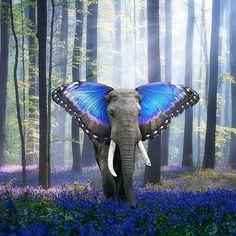 - POTD  @digital_editz  #vibes #elephant. #spiritual #forest #bliss