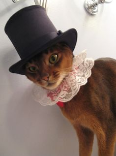 ooh lala cat in hat - #showmecats #thefashionista