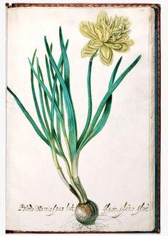Pseudo Narcissus - Jacob Isaacsz van Swanenburch (1571-1638, in de jaren 1620 eerste leermeester van Rembrandt) en 16 afbeeldingen vermoedelijk vervaardigd door Adriaen Jansz. van Witvelt (ca. 1581-1638).