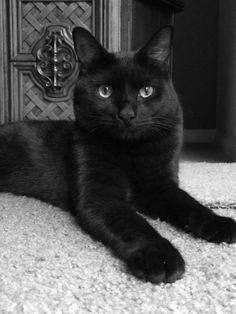 Black cat love! #rescuekitty
