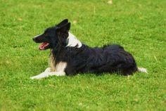 Landschapskudde Oost-Achterhoek | Honden