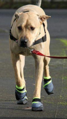 Dog Socks For Hardwood Floors Simple Best Dog Socks  Super - Dog shoes for hardwood floors