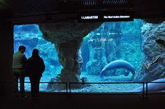 Una gita all'Acquario di Genova - Liguria - Italia http://www.sphimmstrip.com/2014/05/a-genova-per-vedere-lacquario-liguria.html?m=1