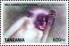 Zanzibar Red Colobus (Procolobus kirkii)