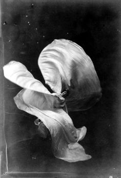 Isaiah  West  Taber,  Photograph  of  Loie  Fuller