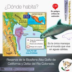 09a10+Donde+habita  The vaquita (Phocoena sinus) is a rare species of porpoise. It is endemic to the northern part of the Gulf of California. The estimated number of individuals dropped below 100 in 2014, putting it in imminent danger of extinction.Since the baiji (Lipotes vexillifer) is believed to have gone extinct by 2006,[4] the vaquita has taken on the title of the most endangered cetacean in the world