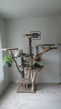 I wanted to bring some of the outdoors to my indoor cat. What better way than a cat tower made out of real trees and plants? He loves it and is rarely seen off of it.