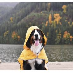 """""""Fall accessories. You can never be too prepared"""" @shandandherdogs"""