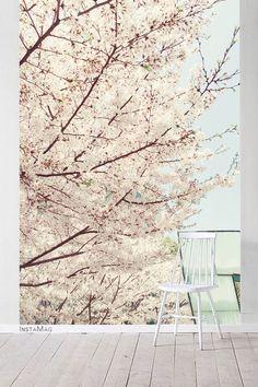 近距离看了它两年了,还看到过许多其他的花,现在的我觉得它真的是这世上最美的花。那么静谧安详,不张扬却于灵魂最深处灿烂温暖,如云浪漫却又脚踏实地。像云端最安稳的那颗心,高于世间却又爱怜着世间,融化一切坚硬与寒意,怜悯包容着整个春天。除却樱花不是春。