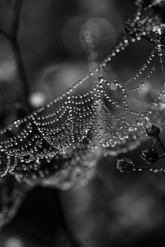 ☾ Midnight Dreams ☽ dreamy dramatic black and white photography - Splendeurs matinales by Valérie Tirard on Macro Photography, Amazing Photography, Spider Art, Spider Webs, Fotografia Macro, Black N White Images, Photo Black, Bokeh, Black And White Photography