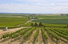#Prosser #Washington #Travel #WAwine The Horse Heaven Hills Annual Trail Drive on Saturday, July 21, 2012 is a rare opportunity to visit with vineyard growers and winemakers — and taste an array of wines from this spectacular wine region.  This self-guided drive along the scenic vineyard trail loops from Alderdale to Paterson just 30 miles south of Prosser, WA.