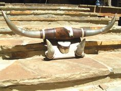 Mounted Longhorn Steer Horns Cowhide 0641 NO Assembly needed ec