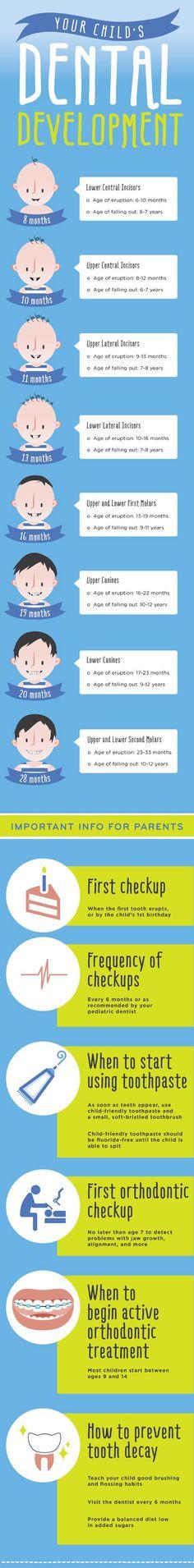 Your child's dental development.