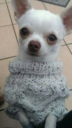 Join Jamie on facebook Jamie a little white chihuahua ALL welcome