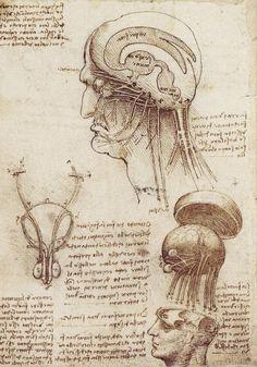 dessin leonard de vinci brainphysiology 08 56 dessins de Leonard De Vinci  histoire design art