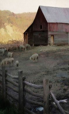 Barn With Sheep In Lot