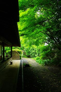 Kanagawa: Kamakura, Japanese garden at Jomyo-ji temple 神奈川: 鎌倉, 浄妙寺 #japan #sighseeing