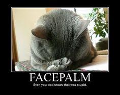 Cat facepalm