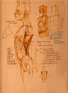 ARTISTS FOR ANATOMY HUMAN