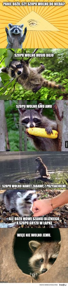 Panie Bożu, czy wolno im do nieba? Polish Memes, Cute Raccoon, Funny Mems, Wtf Funny, Animal Memes, Best Memes, Nice View, Laughter, Funny Pictures