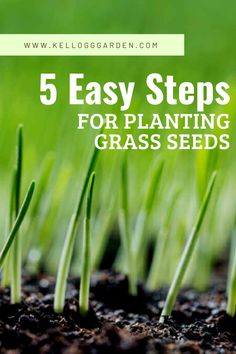Best Way to Plant Grass Seed When looking for a way to refresh your yard, planting grass seed and growing a lawn is one of the easiest tasks. Here is the best way to plant grass seed, in 5 easy steps. Planting Grass Seed, Planting Seeds, How To Plant Grass, Gardening For Beginners, Gardening Tips, Best Grass Seed, Types Of Grass Seed, Bermuda Grass Seed, Growing Grass