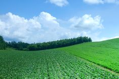 Vegetable and grass fields in Hokkaido stock photo