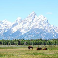 Matkamessuille menossa? Käy tsekkaamassa @travelbloggersgiveback valokuvanäyttely messuosastolla 7m138! Näyttelyn kuvat ovat myynnissä ja tuotoilla tuetaan Laosin lasten koulunkäyntiä. Minulta mukana on tämä kuva Wyomingin biisoneista Grand Tetonin kansallispuistossa.  #TBGB2017 #travelbloggersgiveback (via Instagram)