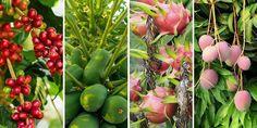 Garden Plants, Gardening Tips, Orchids, Home And Garden, Vegetables, Nature, Gardens, House, Decor