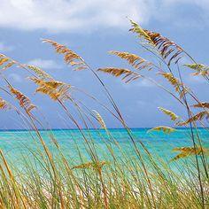 Fototapet - Ocean Breeze