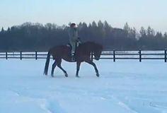 Projekt: Skok po sukces w zawodach! - Wspieram.to #kon #horse #zima #snieg #snow #winter #outdoorriding #horseriding