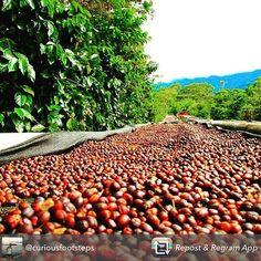 #coffee #XCoffee #barista #aeropress #beans #grind #caffeine #ilovecoffee #coffeeaddict #coffeetime #coffeebreak #coffeeart #weekend #coffeecup #coffeemug #coffeegram #coffeeshots #coffeebeans #coffeelovers #coffeeshop #coffeebar http://ift.tt/1Vbg53z
