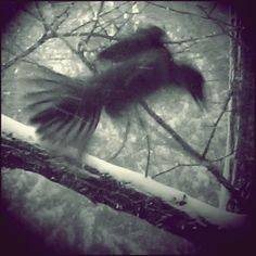 shadow Creepy, Scary, Snow Images, Shadow Art, Ghost Stories, Find Image, We Heart It, Birds, Black And White